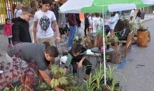 PARKING DAY con plantas y mobiliario